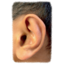 Dolce Ear Training logo