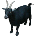 Logo for GoatTracker