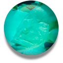 FishBase Client icon