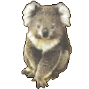 Logo for Koala Image Viewer