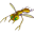 Insectoid 1.0.3